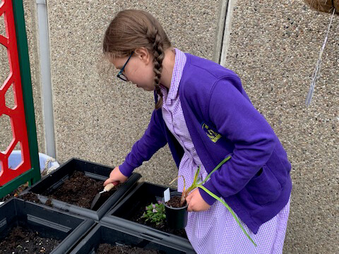 Mint Planting!